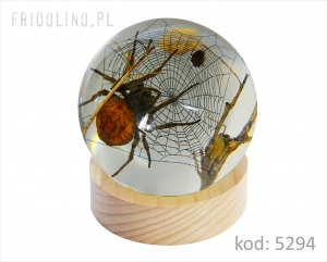Paperweight 75 mm Spider, CLEAR WOOD