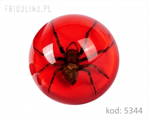 Paperweight 63 mm Spider, CLEAR RED