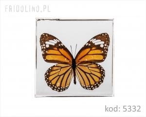 Paperweight75 mm, butterfly, Monarch CLEAR